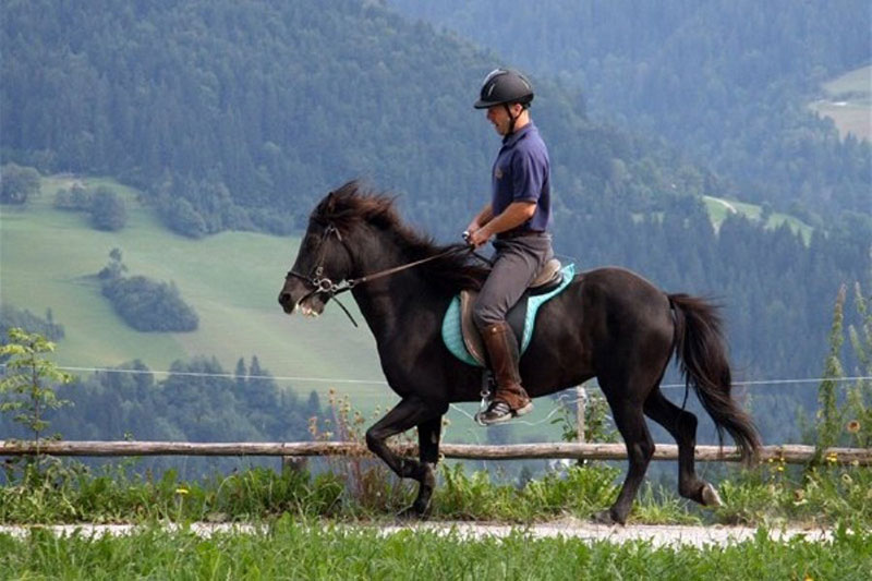 Sport center Prodnik - Horse riding